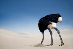 ostrich-head-in-sand-ostriches-not-stick-its-head-in-the-sand-when-in-danger
